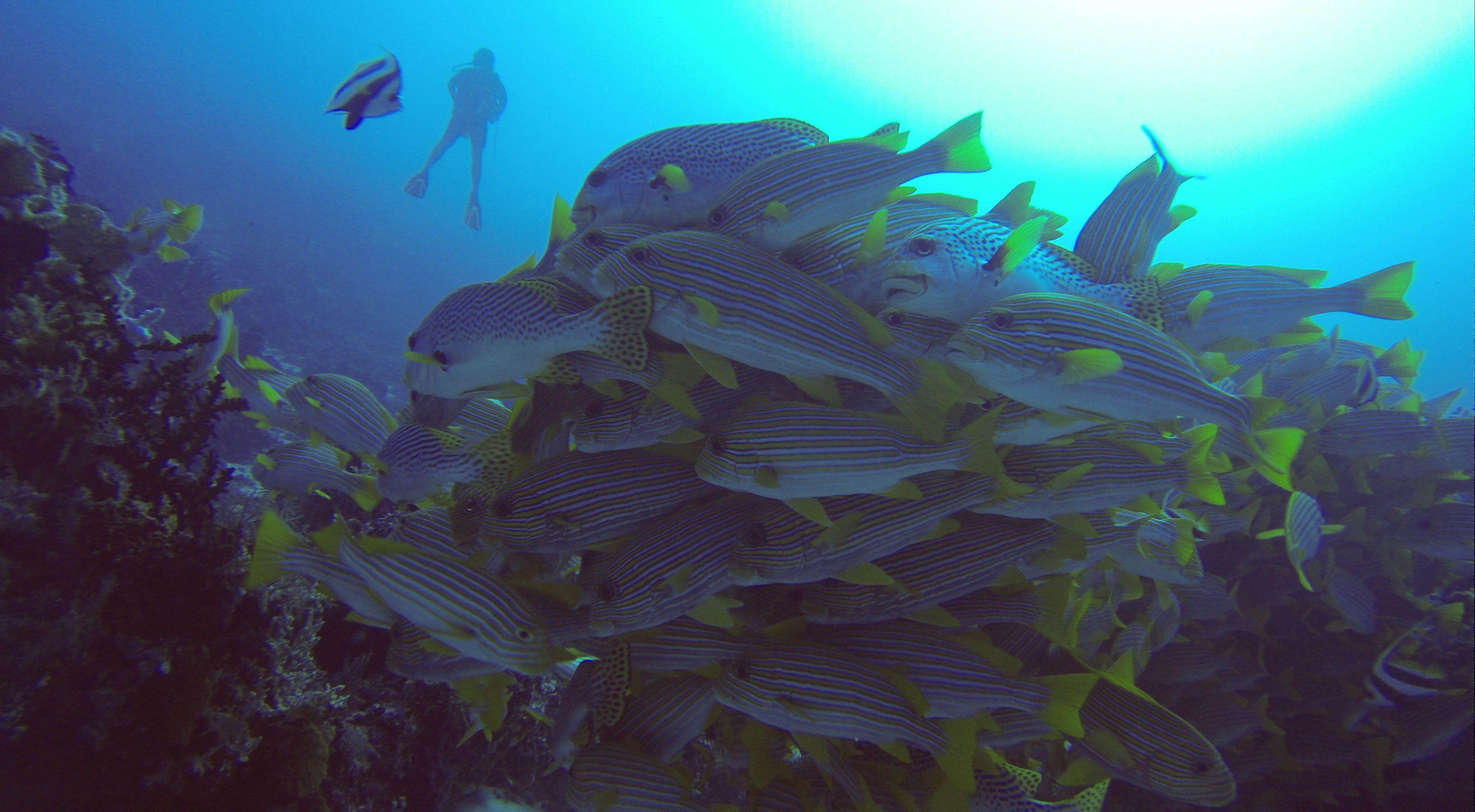 Süßlippenschule und Jutta, Cape Kri, Sorido Bay Resort (Foto aus GoPro-Video)